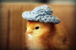 chick-in-hat1